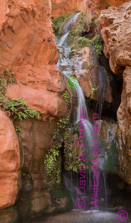 Royal Arch Creek cascades into Elves Chasm, supporting a hanging garden of moss and maidenhair fern, Grand Canyon National Park, © David A. Ponton