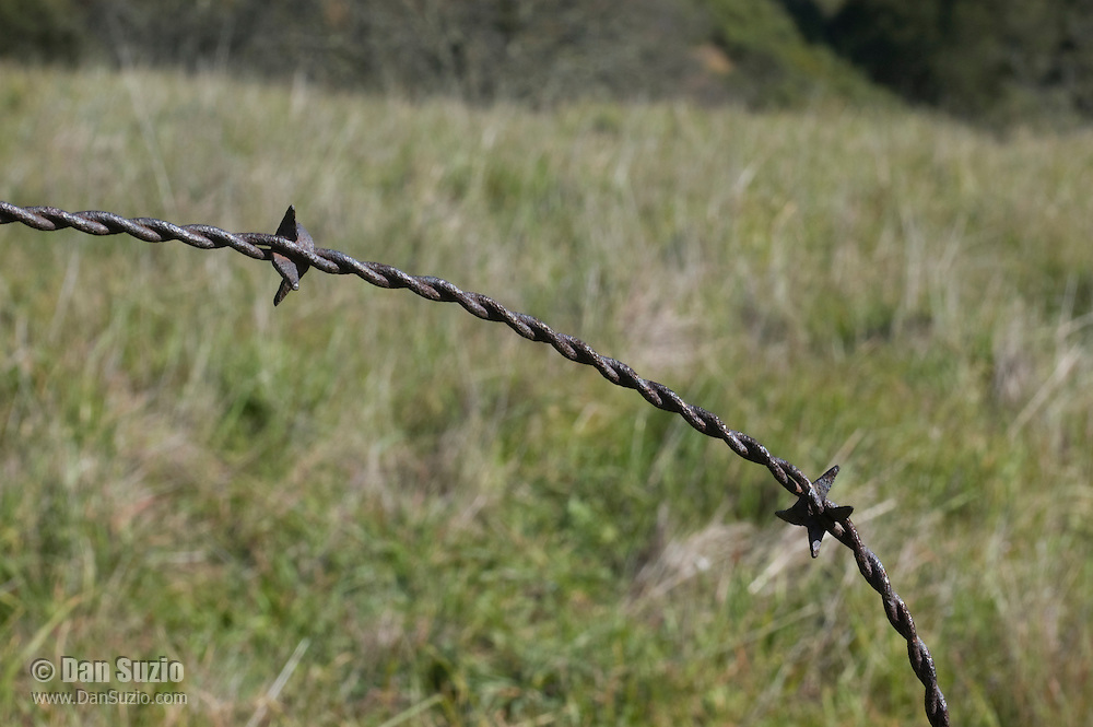 Antique barbed wire left over from when this area was a private ranch.  Mount Diablo State Park, California
