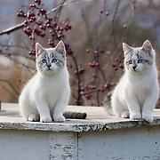 20170121 Ellen kittens