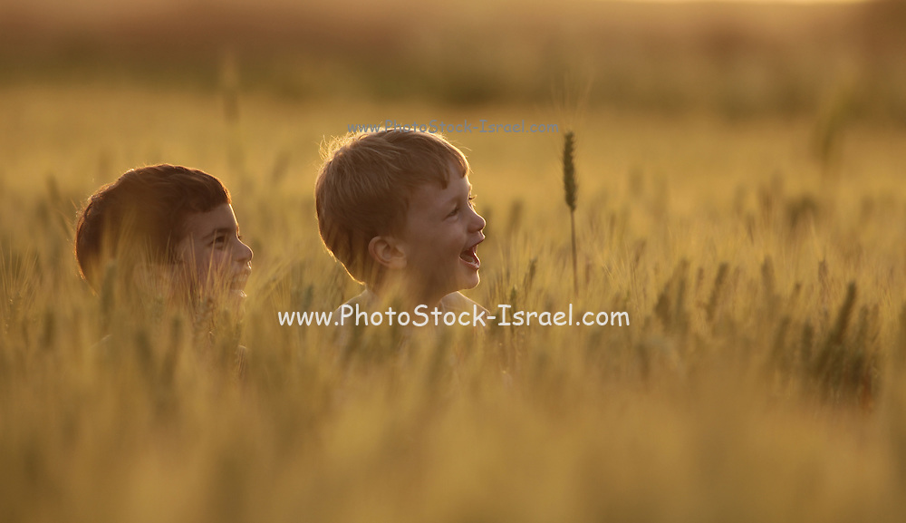 children in a wheat field Photographed in Israel