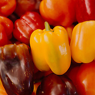 Bell Peppers at the Portland Farmers' Market, Oregon, USA