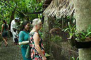 """Anne eye-to-eye with a Luwak, a civet cat essential to the producion of """"Luwak Coffee"""" . . ."""