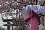 A large pink phallus carried on a mikoshi or portable shrine during the Kanamara Matsuri, (Festival of the Steel Phallus). Kawasaki Daishi, Kanagawa, Japan. Sunday April 3rd 2016. The famous Kawasaki Penis Festival started in 1977 as a small festival to celebrate an old legend about the defeat of a penis eating demon. Today the festival is a huge draw for Japanese and foreign tourists and raises money for HIV and AIDS research.