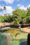 Crocodile, Honolulu Zoo, Waikiki, Oahu, Hawaii