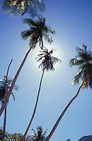 Palmeras y cielo azul, Puerto Colombia,  Aragua, Venezuela.