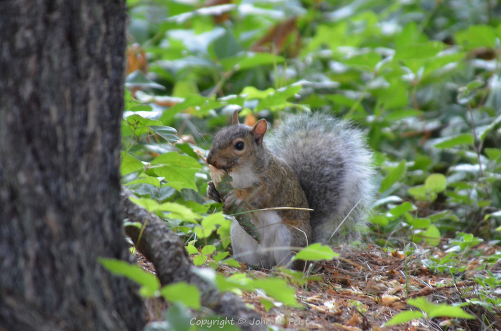 A squirrel enjoying a fresh breakfast at the Omega Institute in Rhinebeck, NY
