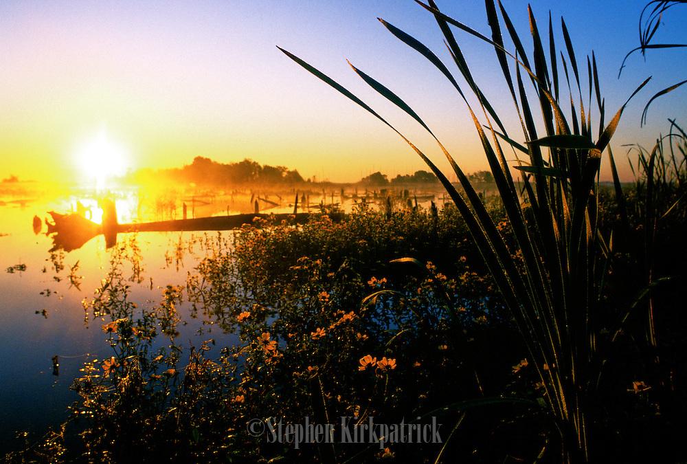 Sunrise & Cattails  - Pearl River swamp, Mississippi.