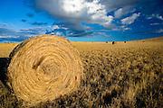 Hay field near Three Forks, Montana.