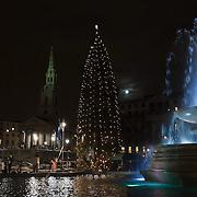 Norwegian Christmas Tree at Trafalgar Square
