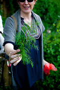 Fennel. Foraging for wild edibles in Los Angeles neighborhood Echo Park. Nance Klehm leads her Urbanforage guided walk showing and educating attendees about various greens, herbs and other edibles readily found along streets, lots and front yards. Los Angeles, California, USA