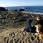 California, Points of Interest, Tourists visiting the elephant seals at Piedras Blancas.