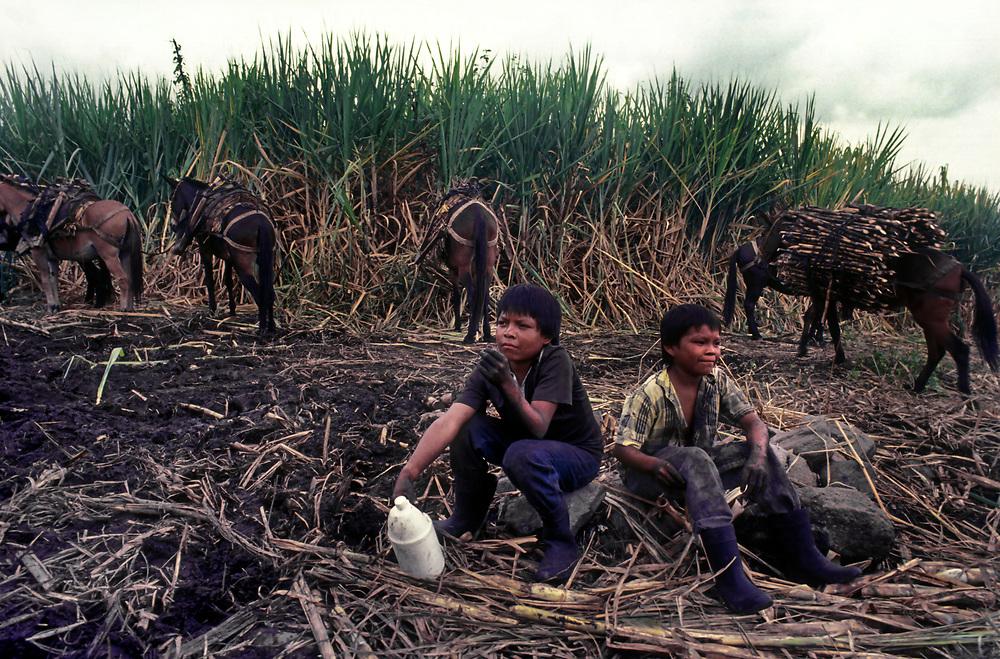 Harvesting sugar cane is tough and violent job, Caldas. Boys become men too quickly.
