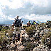 Hikers navigate the rocky terrain of the heath zone of Mt Kilimanjaro's Lemosho Route.