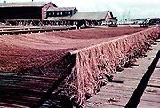 CS00973-16. Fish nets Astoria 1938