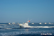 boats race off at start of fishing in Hawaii International Billfish Tournament, Kailua Kona, Hawaii ( Central Pacific Ocean )