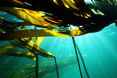Sea weeds - seaweeds