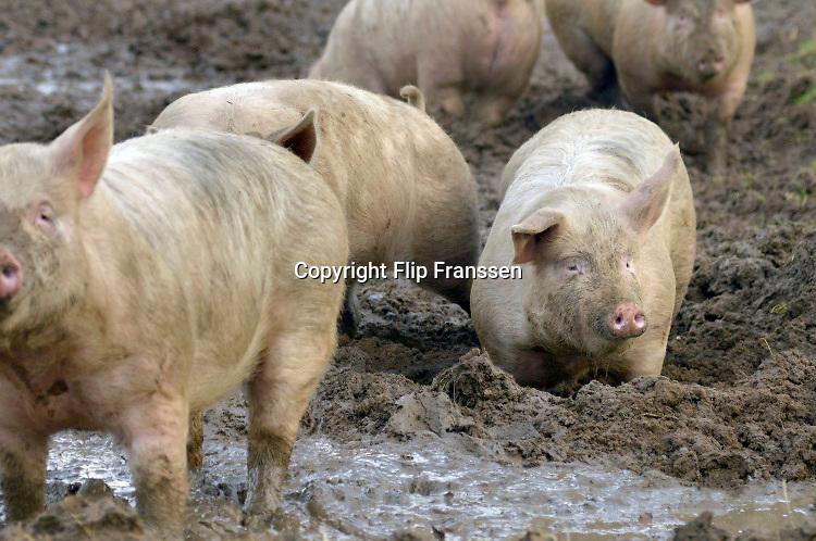 Nederland, Zeddam, 15-12-2016Op een biologische varkenshouderij, boerderij, lopen de dieren constant buiten en wroeten in de modder. Foto: Flip Franssen