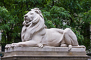 Lion statue in Spring in front of the New York Metropolitan Library, New York City, NY, USA