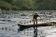 Culture d'algues dans l'archipel des Banggais