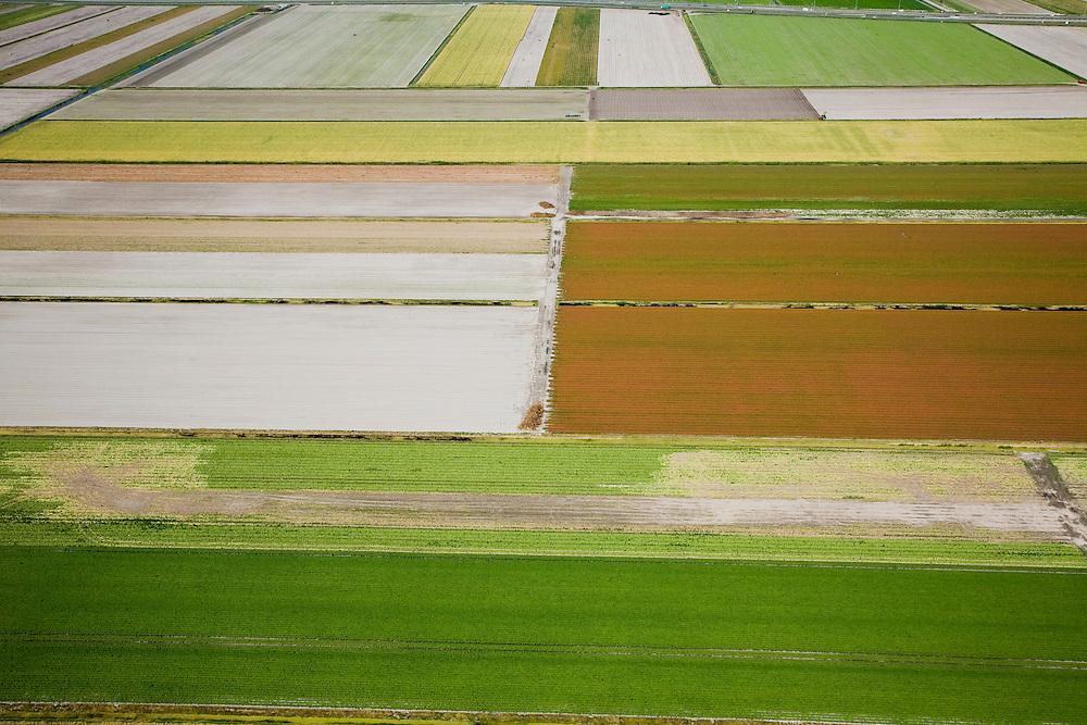Nederland, Noord-Holland, Gemeente Schermer, 14-07-2008; akkers en bollenvelden, gedeeltelijk gerooid, in Polder F, Noordwestelijk deel van de Schermer; bollenveld, bloembol, bloembollen, akker, voren, bol, vlakverdeling, verkaveling, abstractie, mondriaan. .luchtfoto (toeslag); aerial photo (additional fee required); .foto Siebe Swart / photo Siebe Swart