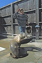 Working With Sea Lion