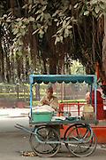 Food Vendor under Banyan Tree in Agra, India