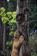 Bear carving, Juneau, Alaska<br />