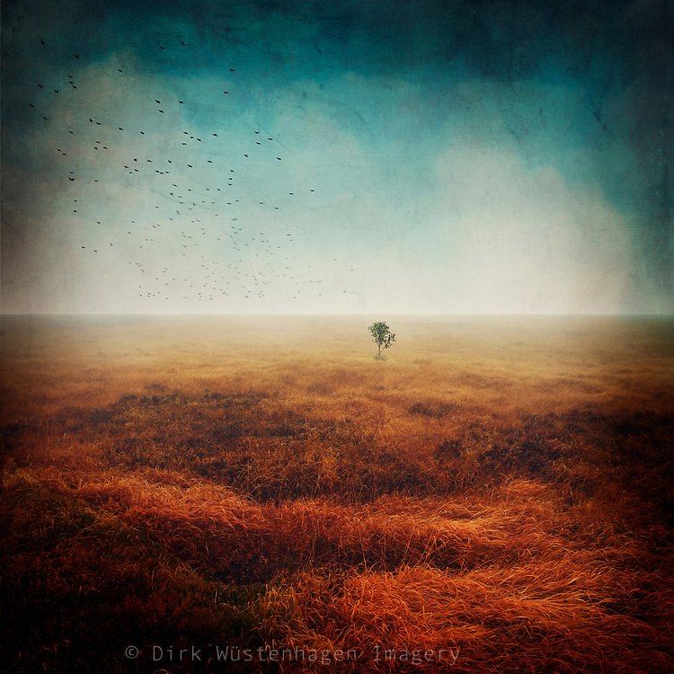 single small tree growing in a red grassland