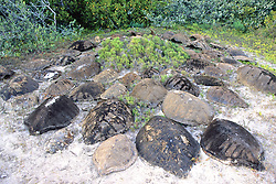 Turtle Shell Graveyard