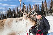 Kenji Yoshikawa with one of his reindeers at his farm outside Fairbanks, Alaska, USA.