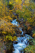 Small unnamed creek running off Choteau Mountain in fall in the Lewis and Clark National Forest, Montana, USA