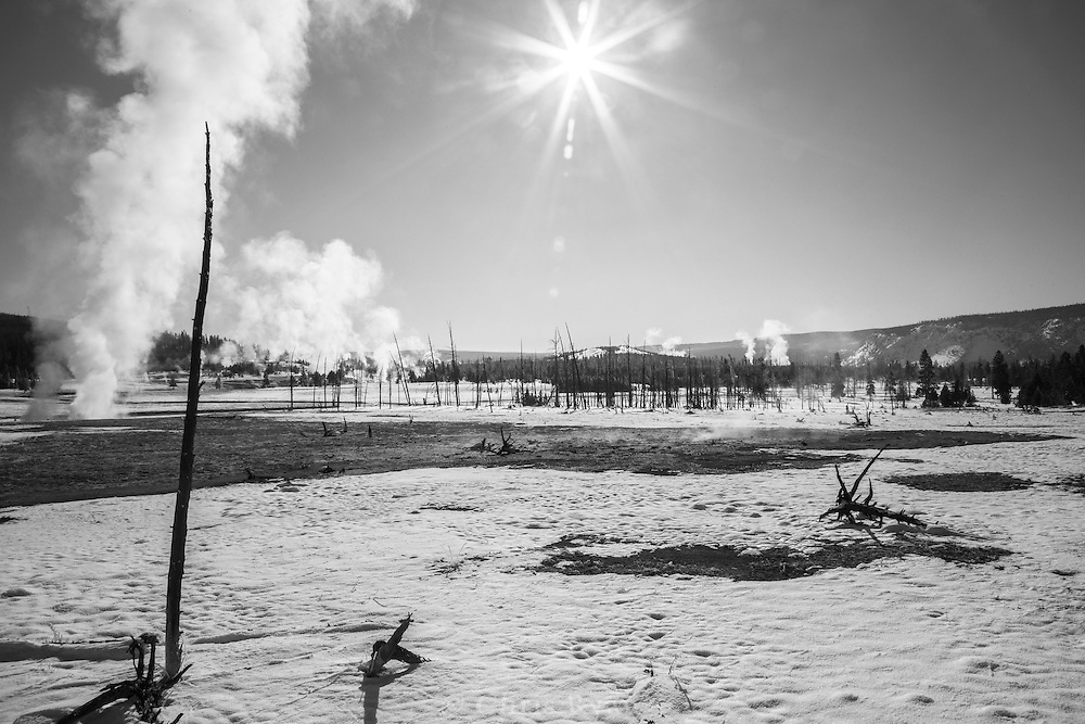 Steam rising among dead trees in Biscuit Basin in winter, Yellowstone National Park