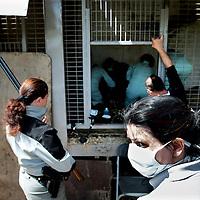 Frankrijk Lieusaint,21 mei 2015.<br /> Stichting AAP die zich inzet voor opvang en welzijn van verwaarloosde dieren waaronder diverse apensoorten haalt nu verwaarloosde 2 tijgers en 2 leeuwen op bij een failliete circus in het plaatsje Lieusaint in de buurt van Parijs om ze vervolgens een betere toekomst te geven in opvangcentrum Primadomus in de buurt van Alicante Spanje<br /> Op de foto: 1 van de tijgers kwam na verdoving alvorens te worden getransporteerd naar dierenopvang Primadomus in Spanje bijna niet meer bij bewustzijn.<br /> De natuur en enviroment gendarme houdt nieuwsgierigen op afstand.<br /> <br /> <br /> <br /> Foto: Jean-Pierre Jans