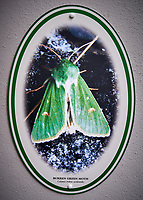 Burren Green Moth at the Village Store in Ballyvaughan. Image taken with a Leica X2 camera.