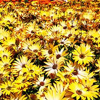 Burst of colour as summer flowers bloom
