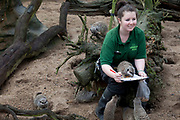 London, UK. Thursday 3rd January 2013. Zookeepers count every animal during ZSL London Zoo's annual stocktake. The compulsory count is required as part of ZSL London Zoo's zoo license, and all of the information is logged into the International Species Information System (ISIS), where it's used to manage the international breeding programmes for endangered animals. Zookeeper Tegan McPhail with Meerkats.