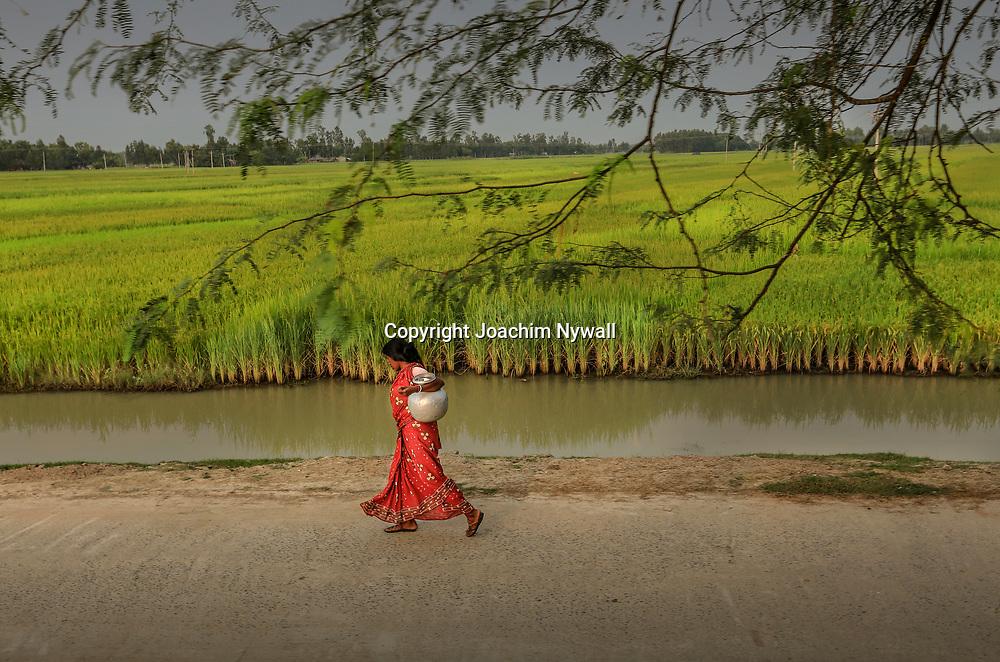 20171030 West Bengal Indien<br /> Kvinna som hämtat vatten från brunnen passerar de gröna risfälten.<br /> <br /> ----<br /> FOTO : JOACHIM NYWALL KOD 0708840825_1<br /> COPYRIGHT JOACHIM NYWALL<br /> <br /> ***BETALBILD***<br /> Redovisas till <br /> NYWALL MEDIA AB<br /> Strandgatan 30<br /> 461 31 Trollhättan<br /> Prislista enl BLF , om inget annat avtalas.