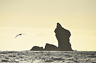 'Sail Rock', Chatham Islands. Pacific Ocean off the coast of New Zealand