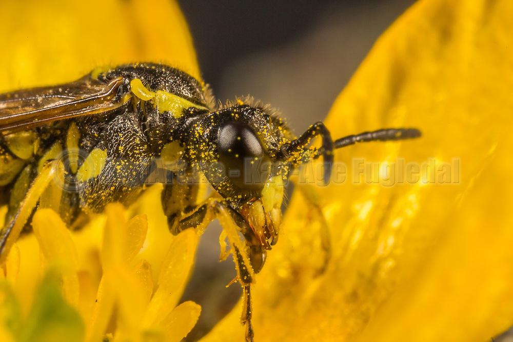 Macro picture of a fly on a flower   Makrobilde av en flue på en blomster.