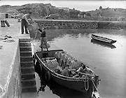 at Carna. Fishing Pier Boat Bulding with the Cloherty family..14/05/1959.<br /> Early morning on the quayside at Ard Mhoir, Carna, as Micheal O Canabhain helps his neighbours Mac Dar O'Fleartaigh and his brother to load their fishing boat for the days trip.
