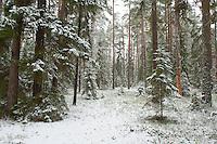Bialowieza forest, Poland. February 2009