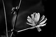 20160731 DDD Home Lilies Hosta Texture