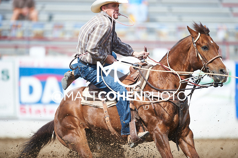 Tie-down roper Nate Baldwin of Blackfoot, ID competes at the Redding Rodeo in Redding, CA<br /> <br /> <br /> UNEDITED LOW-RES PREVIEW<br /> <br /> <br /> File shown may be an unedited low resolution version used as a proof only. All prints are 100% guaranteed for quality. Sizes 8x10+ come with a version for personal social media. I am currently not selling downloads for commercial/brand use.