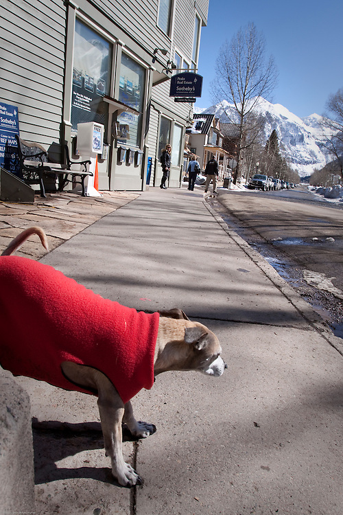 A dog takes a break against a light pole on San Miguel Street in Telluride.