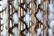 Detail of a silkworm coccon during silk production process, Da Lat, Vietnam, Southeast Asia