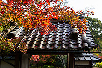 """Shobo-ji Autumn - Shobo-ji was established in 754 by a monk called Chii - a disciple of Ganjin, who built Toshidai-jiin Nara.  Like many temples in Kyoto, Shobo-ji was burned during the wars, then reconstructed in 1615. The temple has two interesting zen gardens, particularly the """"Beasts and Birds Garden"""" named after the shape of some of its rocks. The temple grounds are elevated compared to the rest of the valley, which gives a view of the surrounding area wthat incorporates borrowed scenery such as the distant mountains into the overall garden design.  Shobo-ji pays particular attention to flowers; ikebana can be seen on the temple grounds and in the buildings. In addition, the tsukubai water basin is usually decorated with flowers as well."""