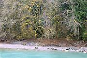 Winter colors on Sauk River North Cascades Washington State