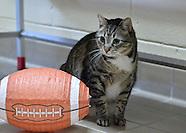 Hallmark Channel Kitten Bowl III