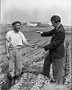 at Carna. Farming, Boat Bulding with the Cloherty family..14/05/1959<br /> Gael Linn assisting farmers to produce new crops for the quick-freeze vegetable market. Here Seosam O hUaithnim, of Mas (Carna) (left) gets advice on his pea crop from Department of Agriculture Inspector Tomas O Bruadair, who is assisting Gael Linn in the project.