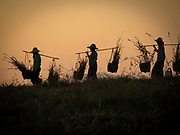 Myanmar farmers on their way home at sunset carrying their bounty, Bagan Myanmar
